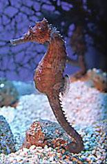 Aquarium Of The Americas Coupons