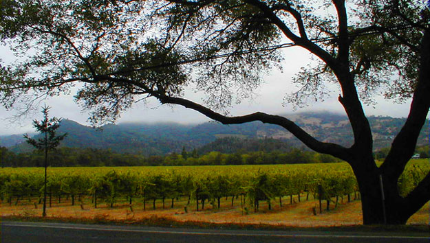Napa Valley California Trusted Tours