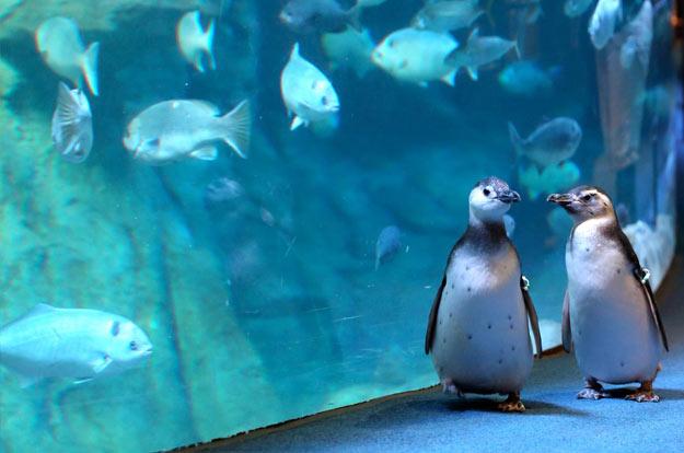 aquarium-of-the-pacific