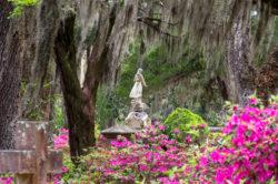 flowers in bloom at bonaventure cemetery