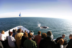tourists on whale watching cruise in san diego on vacation