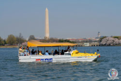 DC ducks passing washington monument by water, a scenic view in washington dc