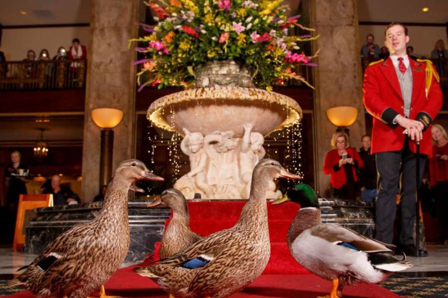 Peabody Hotel Duck Parade