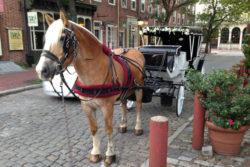 Carriage Tour of Philadelphia