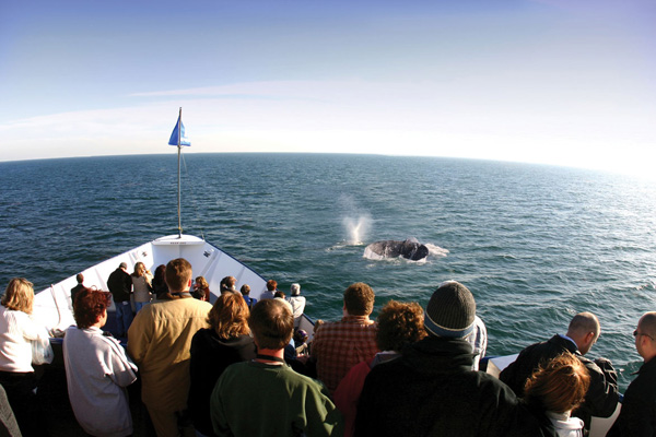 San Diego Morning or Afternoon Whale & Dolphin Watch