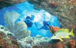 Morning Reef Snorkeling aboard Fury