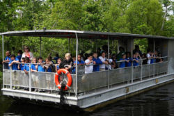 Jean Lafitte Swamp Tour with Transportation in New Orleans