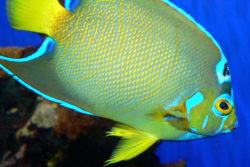 St. Augustine Aquarium