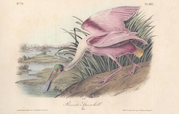 Audubon House and Tropical Gardens of Key West